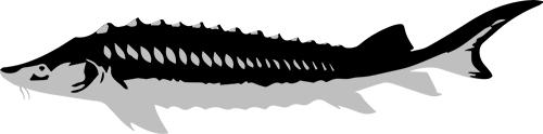 caviarstar-osetra-pic-black-3-small.jpg