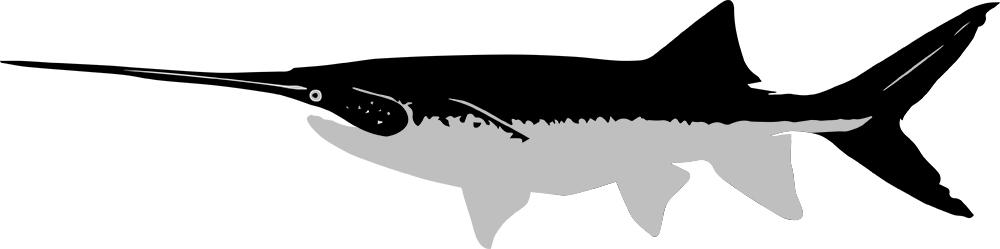caviarstar-paddlefish-black3-med.jpg